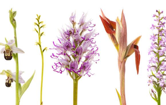Pflanzen pur